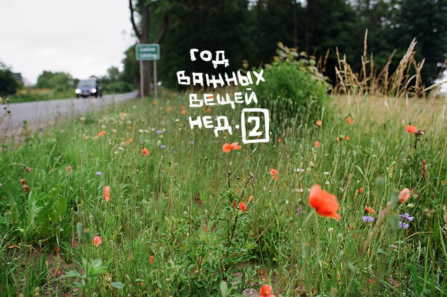 ГОД ВАЖНЫХ ВЕЩЕЙ: неделя 2. Блог Любови Алазанкиной.